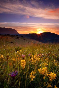 Wildflowers at sunrise near Monti Sibillini, Umbria Italy