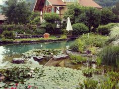 This setting is so beautiful, it's hard to believe it's real. The variety of water lilies, marsh grasses and stones gives this pool by BioNova Natural Pools a quaint and alluring charm. Shut the front door-Ill be in the garden-pool! Natural Swimming Ponds, Garden Swimming Pool, Natural Pond, Swimming Pool Designs, Swimming Pools, Pond Fountains, Water Features In The Garden, Plunge Pool, Cool Pools