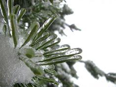 Inverno, Árvore, Filiais, Bough, Gelo, Congelados