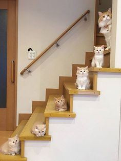 Stairway to heaven. #cats #cattoys #catowners