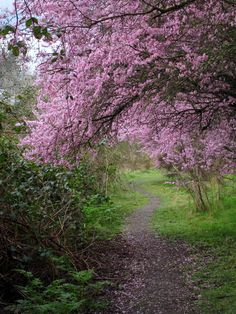 Canyon Park, Washington State