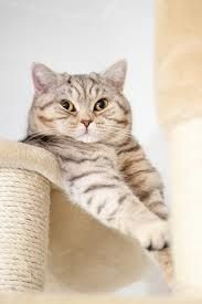 Looks exactly like my own cat :)