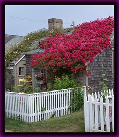 Hidden Places of Nantucket Island - Massachusetts by Jewishfan These flowers on the roof look awesome! / cottage homes