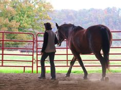 Horse clicker training - Walking together