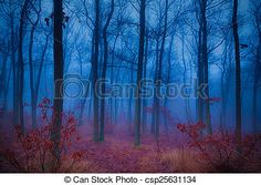 Stock Photo - Mysterious forest - stock image, images, royalty free photo, stock photos, stock photograph, stock photographs, picture, pictures, graphic, graphics
