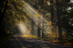 czech republic bohemia forest | Recent Photos The Commons Getty Collection Galleries World Map App ...