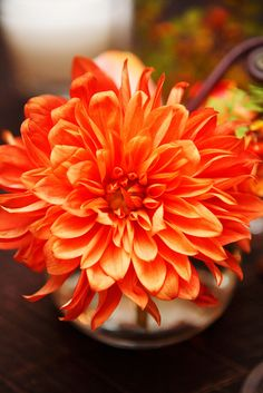 Orange Dahlia- simple arrangement of a few or we could add in some other fall colors.  these really speak for themselves.  depends on how many arrangements you want down the table.   tbd