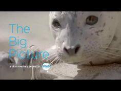 "Dawn Saves Wildlife - The Big Picture Ep. 2: ""Seal Pups Love Milkshakes""..."