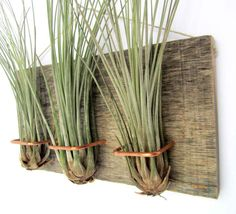 3 mounted Barn Wood Air plant base Large Form Junecea by NiaCraft, $46.50
