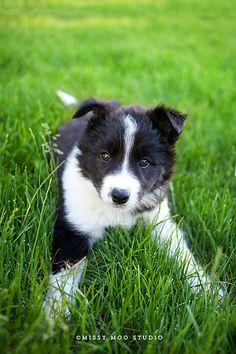 Puppy Olive   Flickr - Photo Sharing!