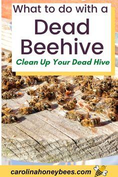 How To Start Beekeeping, Beekeeping For Beginners, Backyard Beekeeping, Beekeeping Course, Types Of Honey Bees, Dead Bees, Feeding Bees, Bee Facts, Bee Swarm