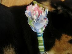 Don't Disturb This Groove: Flower Dog Collars
