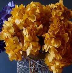 Natural Preserved Golden Mango Hydrangea Flowers