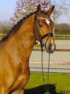 Bay Horse, Oldenburg, Beautiful Horses, That Way, Equestrian, Sims, Pony, Animals, Photos