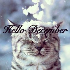 welcome december images   Hello December' (A Kitty Welcomes Winter w/ a Little Snow)