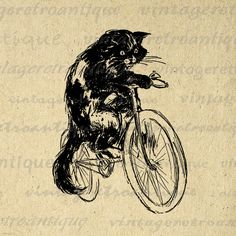 Printable Image Cat Riding Bicycle Digital Download Graphic Antique Clip Art. Vintage high quality digital illustration from antique artwork for printing, transfers, pillows, and much more. Great for etsy products. This image is high quality, large at 8½ x 11 inches. Transparent background version included with all images.