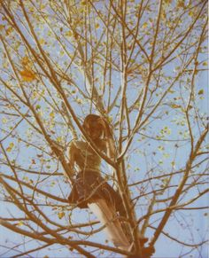 (by Kate Pulley) Reminds me of the sycamore scene in Flipped