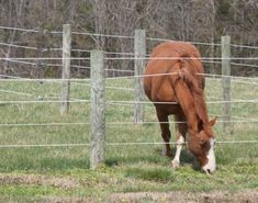 Horses and fences don't mix!  Tips for  keeping your horse's legs and neck where they belong.   http://www.proequinegrooms.com/index.php/tips/health-and-well-being/horses-and-fences-don-t-mix-keep-your-horse-away-from-the-fence/