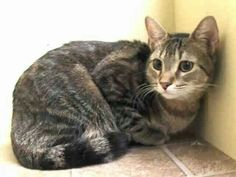 Please save this sweet cat from death at ACC shelter in New York City URGENT visit pets on deathrow on facebook New York City