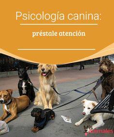Basset Hound, Dog Behavior, Westies, Pet Health, Dory, Border Collie, Betta, Dog Life, Animals And Pets
