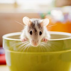Sweet little mouse, so cute