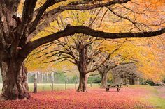 Autumn in Mount Wilson, Blue Mountains NSW Australia     Best time of the year!  #Holidays