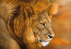 Danielle Beck - Lion du Serengeti