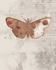 Moth Art  24x36 Print Large  Leopold  Butterflies and by papermoth, $125.00