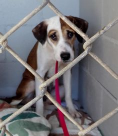 Just look at this sad baby! Hound Mix/Stray. ID#A19170984. At Wakulla County Animal Control. To adopt/foster please contact FriendsOfWCAC@gmail.com OR the shelter directly: 9 Oak Street, Crawfordville, Florida 32327. Phone (850) 926-0902.