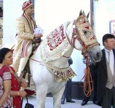 One of our decorated white horses for South Asian weddings