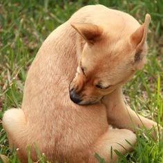 Excellent article on hot spot causes and treatment. Puppy Scratching by Shutterstock.