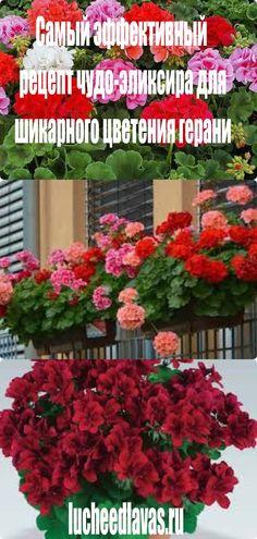 Small Farm, Peonies, Floral Wreath, Wreaths, Flowers, Plants, Beauty, Decor, Garden