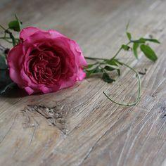 Jessica Zimmerman | zimmermanevents.com  #jessicazimmerman #zimmermanevents #florist #floraldesign #jzfloral #rose