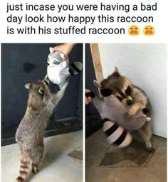 34 Funny Animal Memes - Funny Animal Quotes - - 34 Funny Animal Memes The post 34 Funny Animal Memes appeared first on Gag Dad. Cute Animal Memes, Cute Funny Animals, Funny Animal Pictures, Cute Dogs, Cute Babies, Funny Cats, Hilarious Animal Memes, Funny Raccoons, Funny Meme Pictures