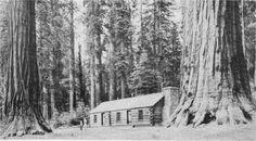 Giant Sequoias surround the Mariposa Grove Museum in Yosemite