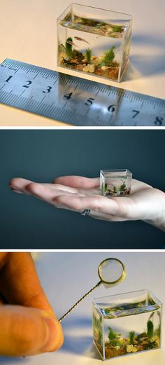 This is the world's smallest working aquarium, which holds just two tea spoons of water. The miniature wonder, which is made of glass and measures just 30 mm. wide by 24 mm. high and 14 mm. deep, can be held in the palm of your hand. It is so small there is only room for these tiny zebra fish.