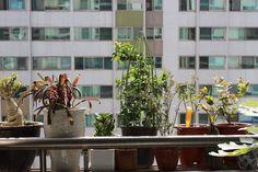 10 plantes qui attirent des énergies positives