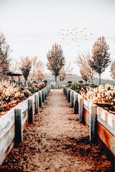 These great garden photography tips will help you to perfect landscape, nature, still and macro shots. Read the best lighting, composition and gear for garden photos! Autumn Day, Autumn Leaves, Fallen Leaves, Autumn Trees, Fall Winter, Garden Planner, Seasons Of The Year, Autumn Photography, Travel Photography