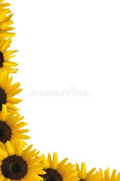 Photo about Illustration of sunflower border isolated on white background. Image of clear, beautiful, backgrounds - 17071179 Pink Petals, Flower Petals, Pink Flowers, Aesthetic Iphone Wallpaper, Aesthetic Wallpapers, Sunflower Iphone Wallpaper, Sunflowers Background, Macro Flower, Bible Crafts