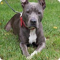 Adopt A Pet :: Gabby - Newport, KY