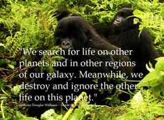 We search for life on other planets and in other regions of our galaxy.  Meanwhile, we destroy and ignore the other life on this planet.