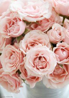 Roses  Tumblr on We Heart It. http://weheartit.com/entry/48783081/via/sullykarinacastro3