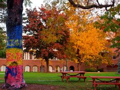 Fall foliage by The Painted Tree