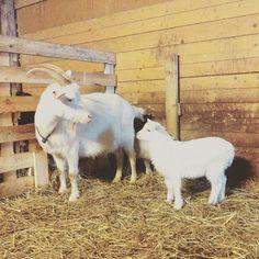 #kivitalu #family #farmlifebestlife