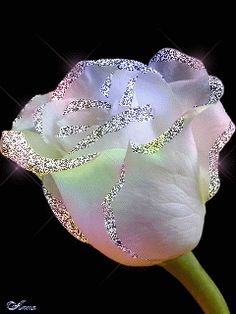 🌷A Glittery White Rose🌷 Beautiful Flowers Wallpapers, Beautiful Rose Flowers, Beautiful Gif, Love Rose, Roses Gif, Flowers Gif, Rare Flowers, Glitter Gif, Glitter Roses
