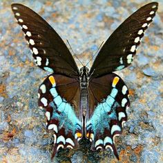 Mariposa - One of the most beautiful combination of colors, contrast and design-pattern