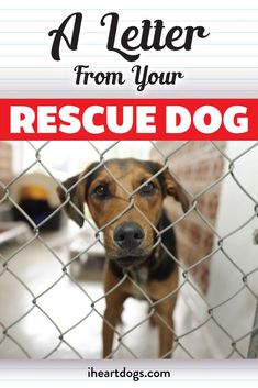 For anyone who has ever rescued a dog, you need to read this...