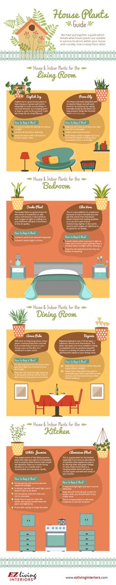 Beginners Guide To Houseplants Ultimate Guide Video care chart Beginners Guide To Growing Plants Indoors - The WHOot Perfect Plants, Cool Plants, Easy Care Indoor Plants, Zebra Plant, Growing Plants Indoors, Plant Lighting, Lighting Ideas, Room With Plants, Plant Guide