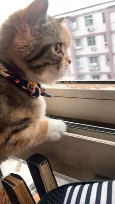 Funny Cute Cats, Cute Baby Cats, Cute Cat Gif, Cute Little Animals, Cute Cats And Kittens, Cute Funny Animals, Kittens Cutest, Cute Animal Videos, Funny Animal Pictures