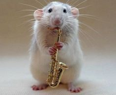 Top-10-Rats-Playing-Musical-Instruments-2.jpg (510×419)
